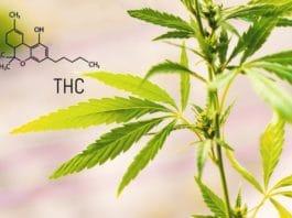 tetrahydrocannabinoid thc